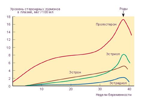 Уровень прогестерона при беременности на ранних сроках