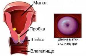 какая шейка матки на ранних сроках беременности