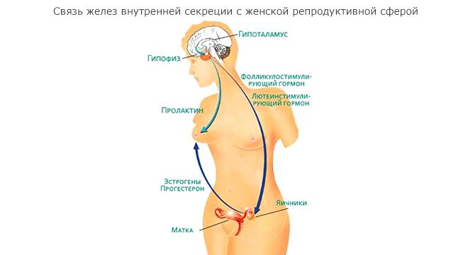 Как работает гормональный фон