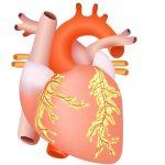 Учащенное сердцебиение при беременности на ранних сроках