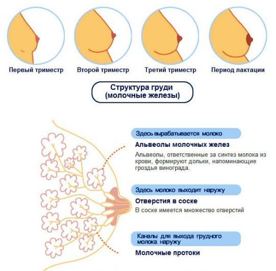 Болит грудь на ранних сроках беременности: почему сильно болит, где болит в норме