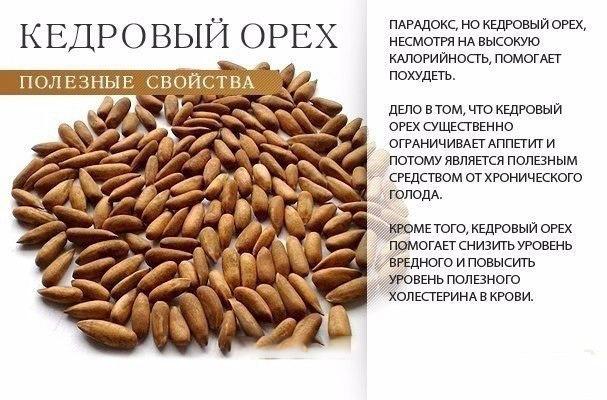 Польза кедрового ореха