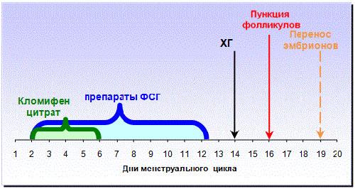 коротка схема эко