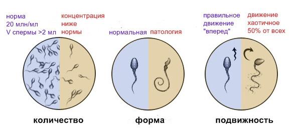 Анализы перед планированием беременности: какие сдать женщине и мужчине, список анализов, какие гормоны, генетический