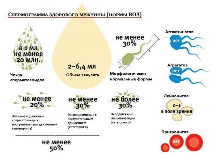 Спермограмма здорового мужчины