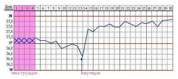 График базальной температуры для определения овуляции
