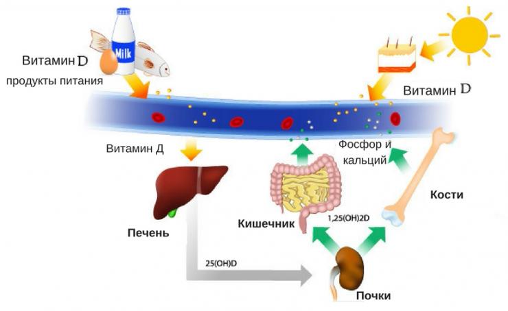 витамин Д для беременных