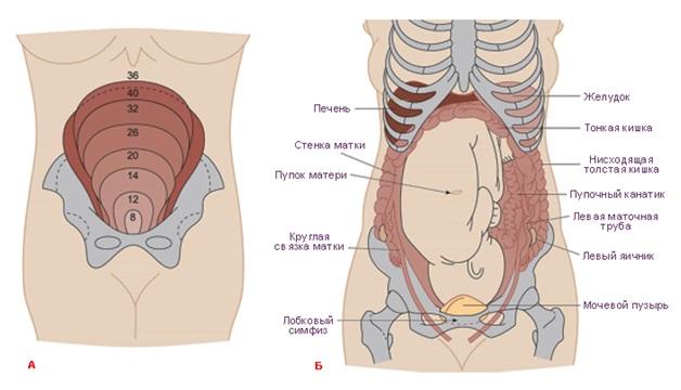 тяжело дышать при беременности