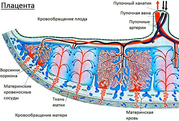 Аномалия плаценты