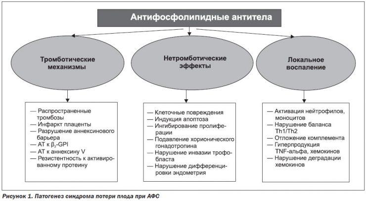 антифосфолипидные антитела