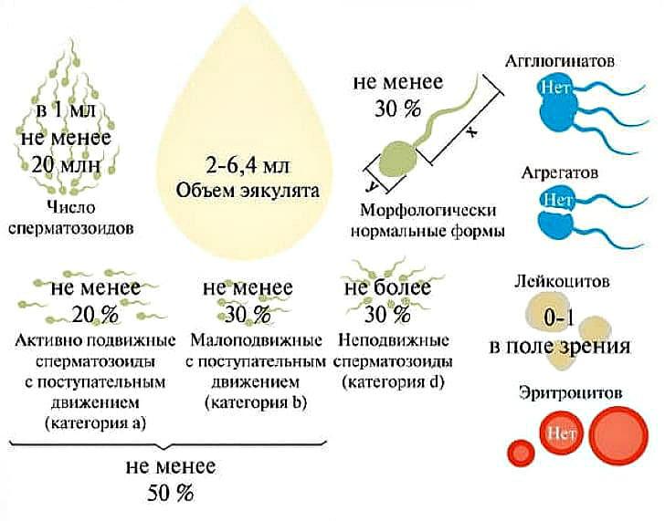 критерии спермаграммы в норме у мужчин